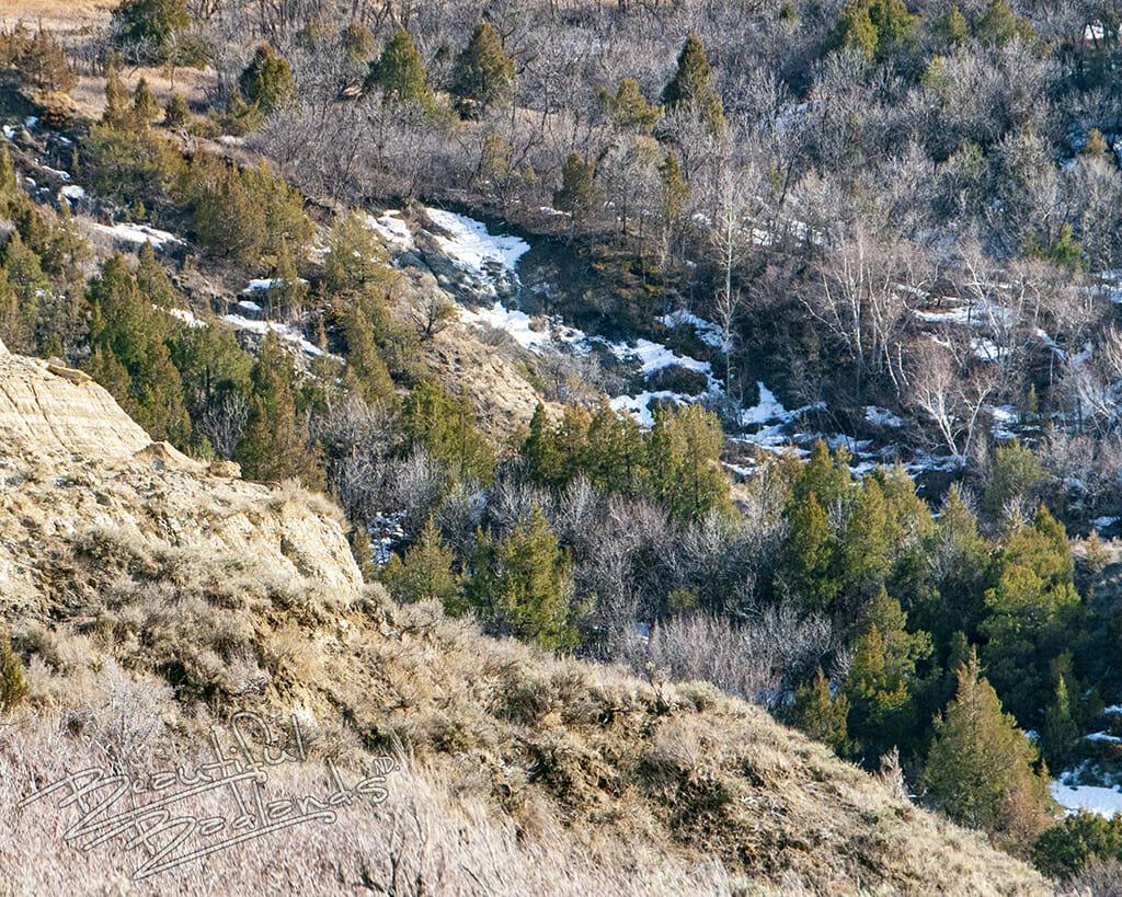 Little Missouri State Park evergreens