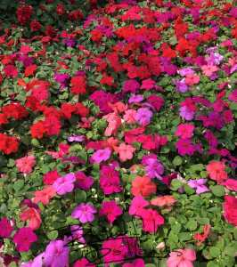flowers, Glendive, greenhouse, Montana, coffee, coffeeshop, BeautifulBadlandsND