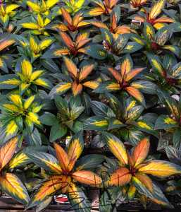 flowers, greenhouse, Glendive, coffee, coffeeshop, eatery, BeautifulBadlandsND