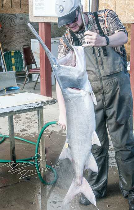 A day snagging paddlefish on the Yellowstone and Missouri Rivers