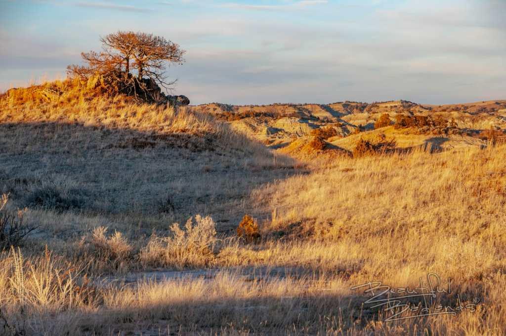Scrub tree on hill at sunset