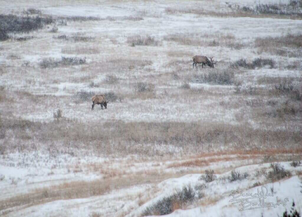 elk graze down below in a valley