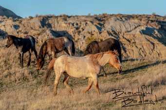 Wild Horses of Theodore Roosevelt National Park, North Dakota