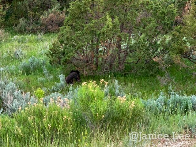 Wild Horse in Brilliant Grass and Sage at Theodore Roosevelt National Park, by Janice Lee