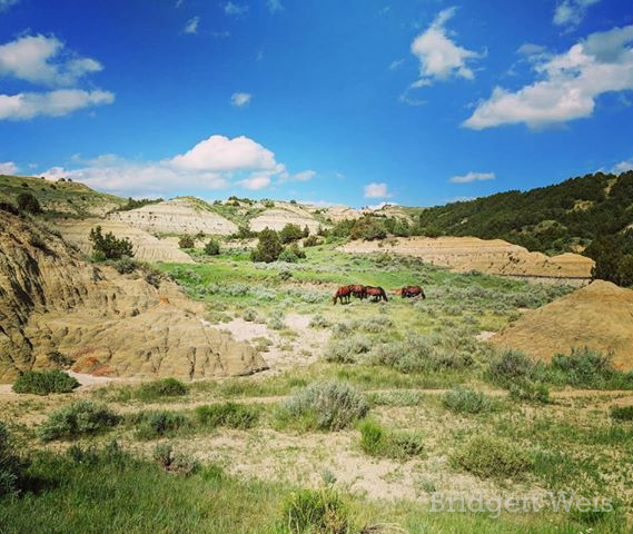 Horses Graze in Theodore Roosevelt National Park in North Dakota, by Bridgett Weis. June 2019