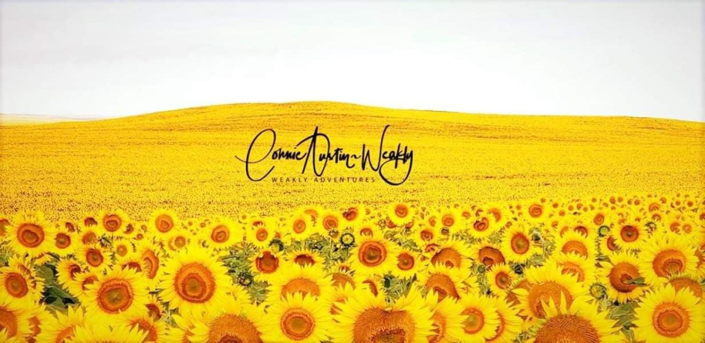 Slope County Sunflower Field, by Connie Austin Weakly