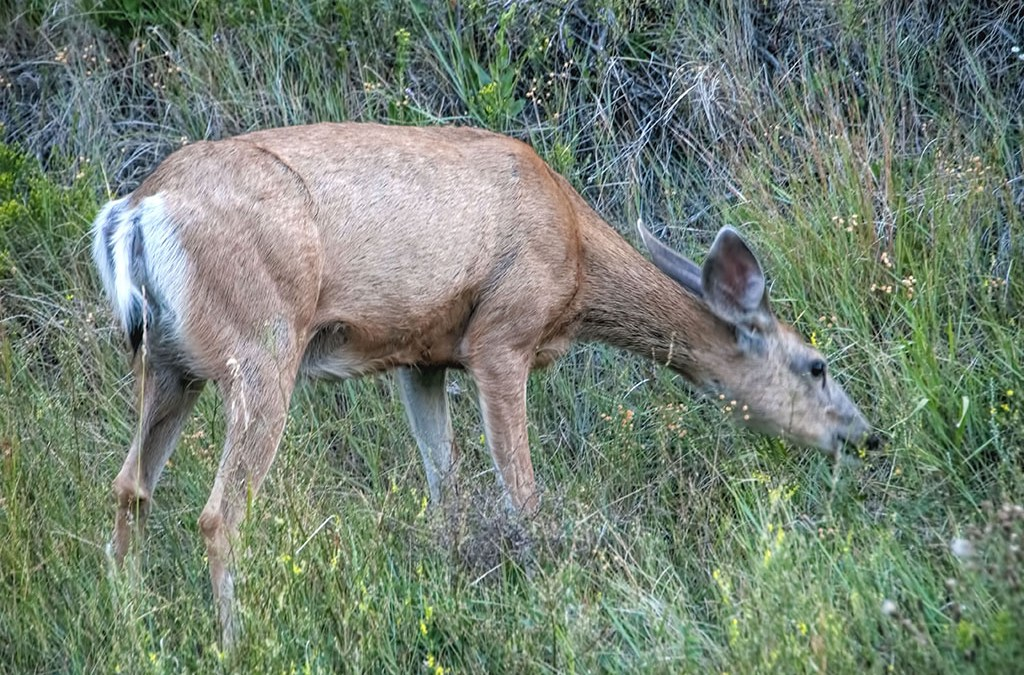 Reward — wildlife come out at Dusk in the National Park