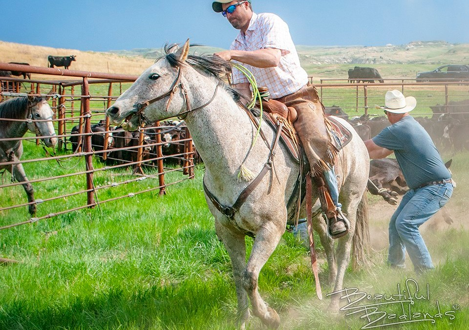 Getting Off the Beaten Path and into the Middle of a Spring Roundup