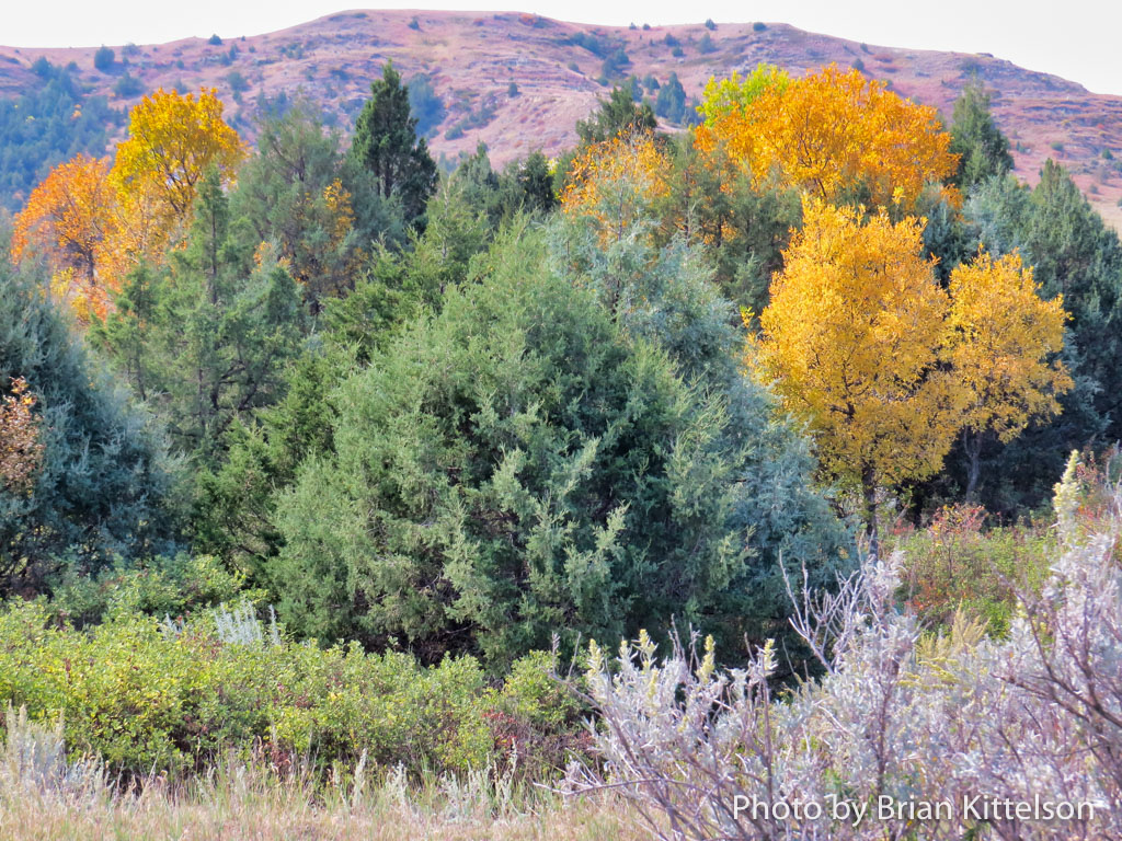 Bold colors accentuate the landscape of the North Dakota Badlands each fall.