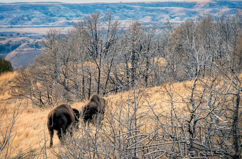 Use this Checklist Before a Fall Hike in the Badlands