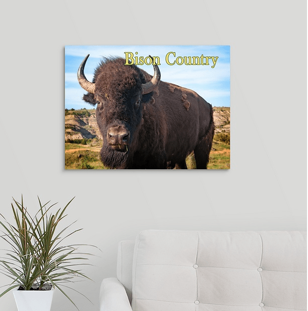 Bison Country - Bison Up Close in Color Canvas Wrap (on wall)