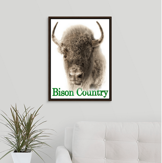 Bison Country - Sepia Portrait Walnut Floating Frame Canvas Wrap (on wall)