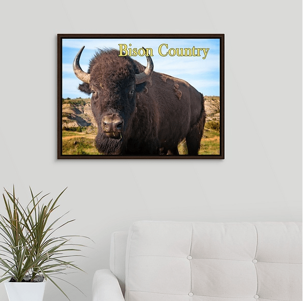 Bison Country - Bison Up Close in Color Walnut Floating Frame Canvas Wrap (on wall)
