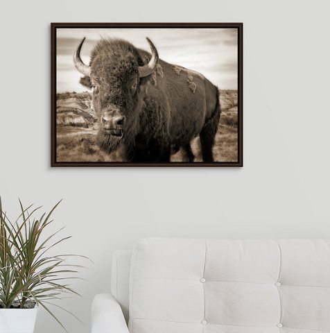 Bison Up Close - Sepia Walnut Floating Frame Canvas Wrap (on wall)