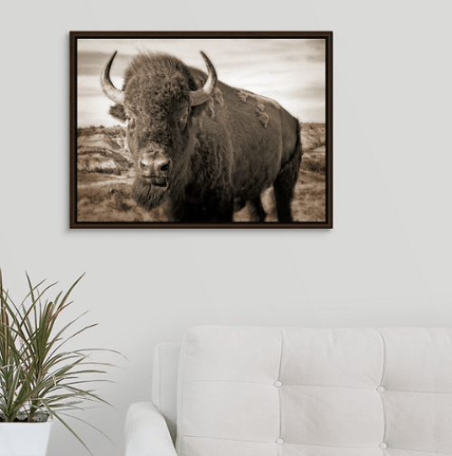 Bison Up Close!  Our Signature Sepia Image!  Walnut Floating Frame Canvas Wrap (on wall)