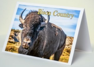 Bison Country! Bison Up Close in Color with Gold Text Notecard 5 x 7 inches