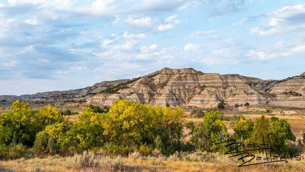 Wildlife Roamed in the First Fall Colors in Theodore Roosevelt National Park, North Dakota