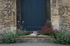 Cat on doorstep, Lacock