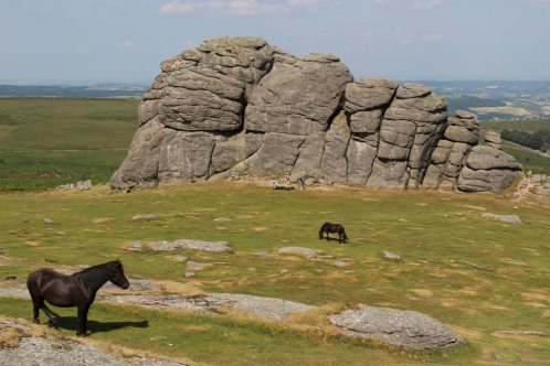 Dartmoor ponies, Haytor, Dartmoor