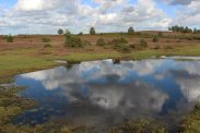 White Moor, near Lyndhurst, New Forest