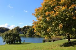 Lakeside, Stourhead