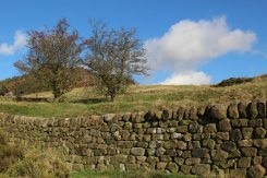 Dry stone wall, below The Roaches