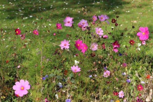 Wild flowers, grounds of Old Swan & Minster Mill Hotel, Minster Lovell