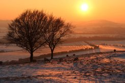 A Christmas walk on Dunstable Downs, Bedfordshire