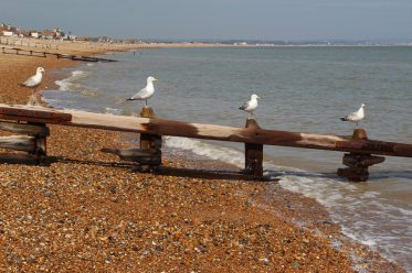 Seagulls on breakwater, Pevensey Bay