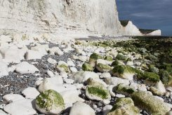 Chalk boulders, below Seven Sisters