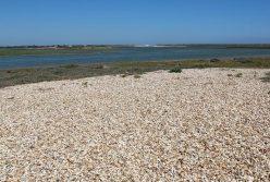 Beach and saltmarsh, Pagham Harbour, Church Norton