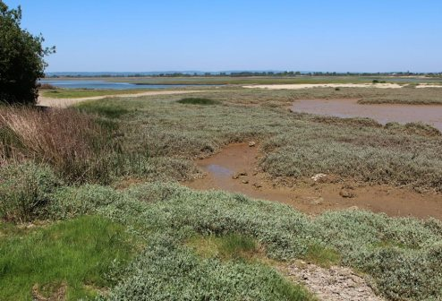 Saltmarsh, Pagham Harbour, Church Norton