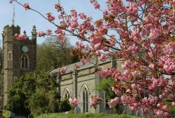 Cherry blossom, St. Mary's Church, Appledore