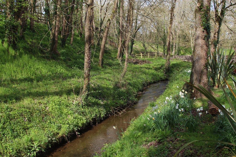 Woodland stream, Bickleigh Mill, Bickleigh