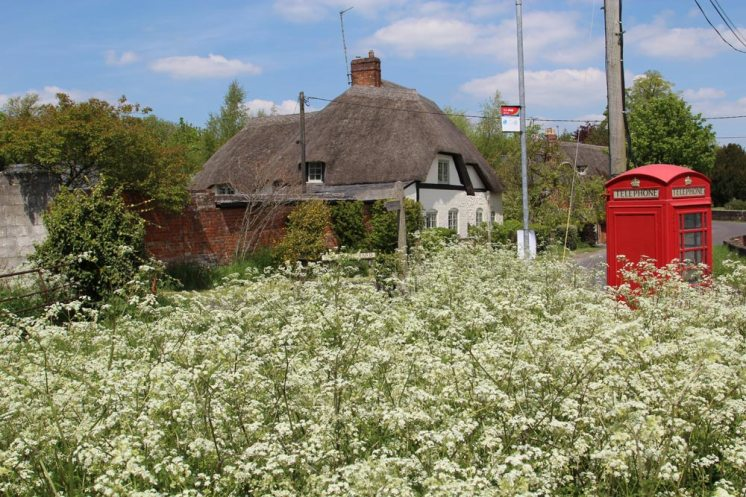 Cow parsley, Bishops Cannings