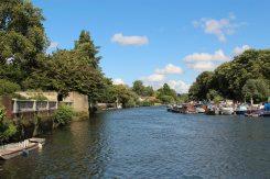 River Thames, Twickenham