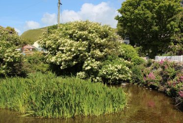Mill Pond, Lulworth Cove