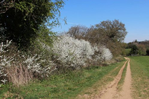 Footpath to Gomshall, from Shere