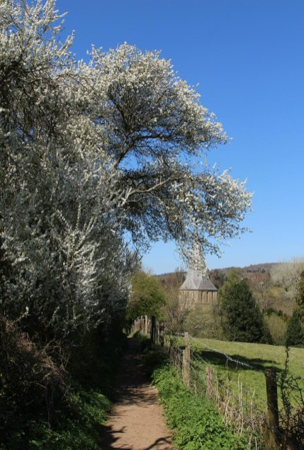 May blossom and St. James' Church, footpath, Shere