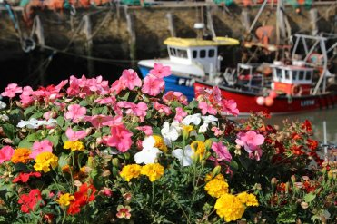 Flower display, Whitstable Harbour, Whitstable