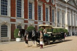 Shire horses and carriage, East Front, Hampton Court Palace