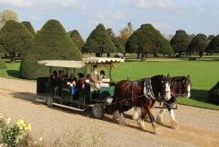 Shire horses and carriage ride, Broad Walk, Hampton Court Palace