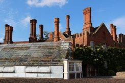 The Great Vine, Hampton Court Palace