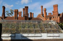 The Great Vine, Hampton Court Palace