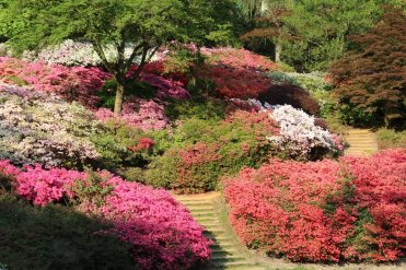 Punch Bowl, Valley Gardens, Virginia Water