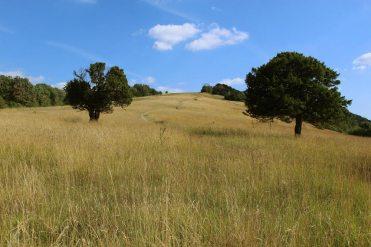 Burford Spur, Box Hill