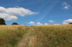 Path up Burford Spur, Box Hill