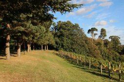 Fir Walk and the Vineyard, Painshill Park, Cobham