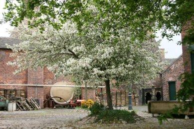 Apple blossom tree, Gladstone Pottery Museum, Longton, Stoke-on-Trent