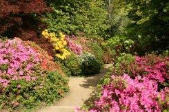 Azalea Steps, Winkworth Arboretum